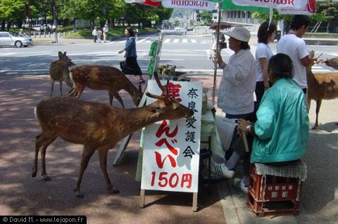 Biches en libertées en pleine ville de Nara