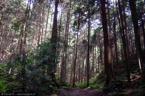 forêt du Japon