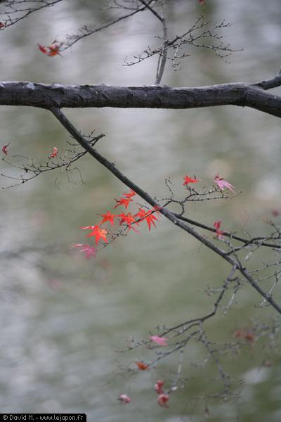 Dernières feuilles d'automne au Japon