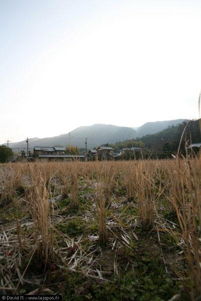 La campagne à Kyoto - Japon