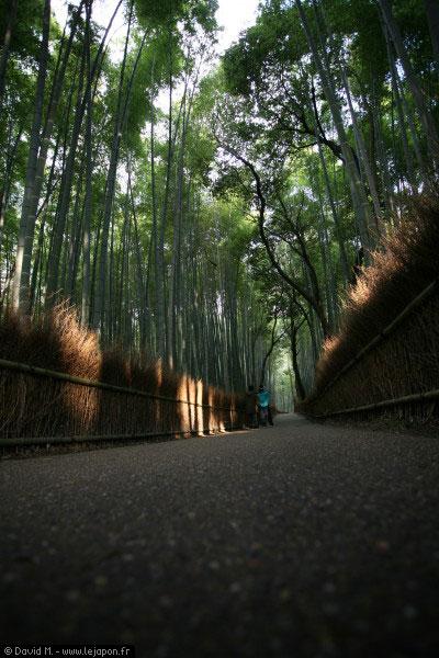 Forêt de bambous à Kyoto - Japon