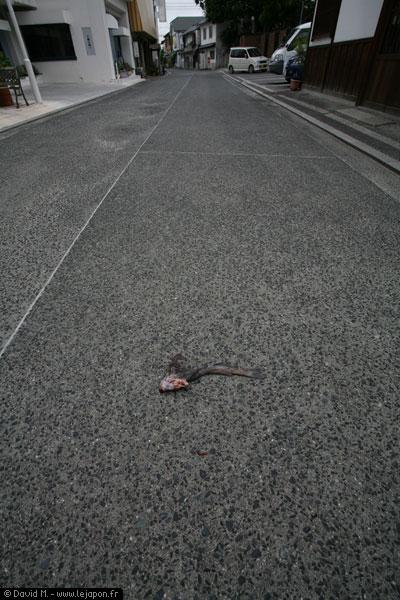 Poisson écrasé sur la route au Japon à Kurashiki
