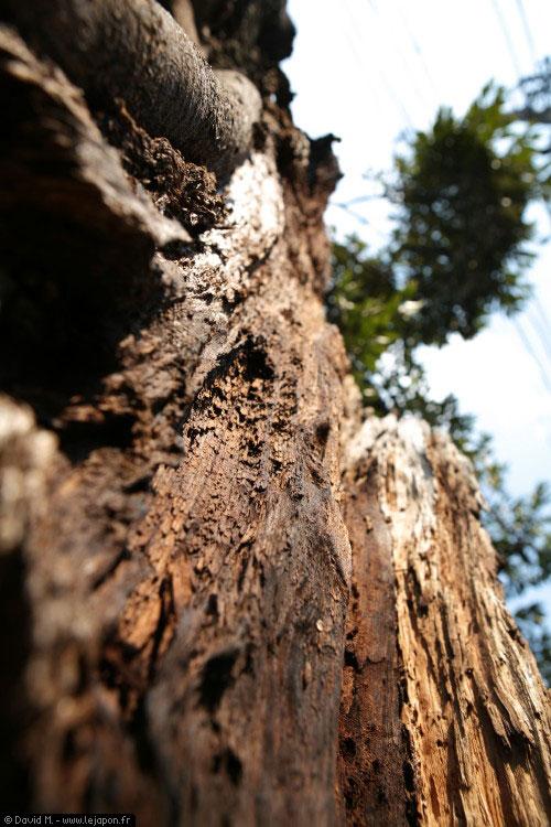 Un arbre tentant de survivre à Tokyo