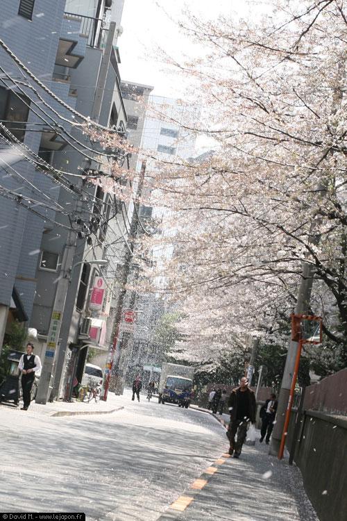 Neige de pétales de Sakuras sur Tokyo