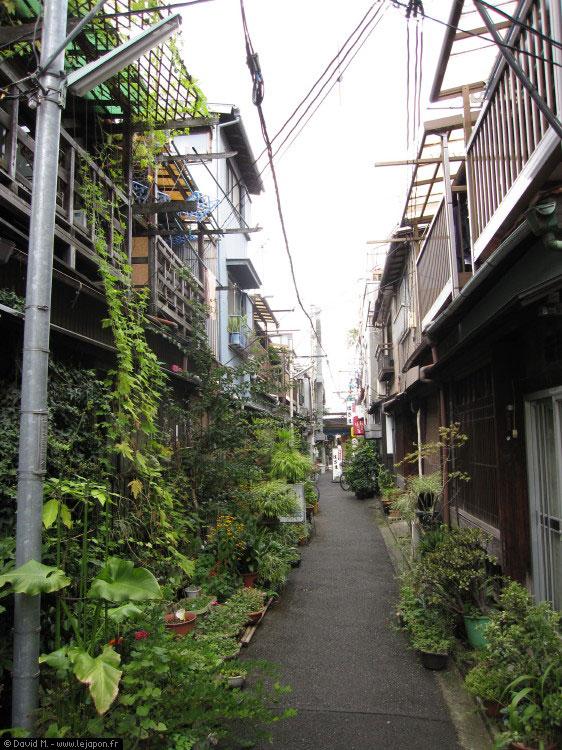 Tokyo c'est la jungle... rien de mieux qu'un Safari Photo pour découvrir la mégapole !