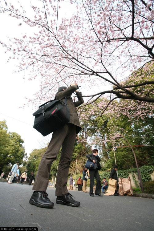 Premiers cerisiers Sakuras en fleurs à Ueno - Tokyo