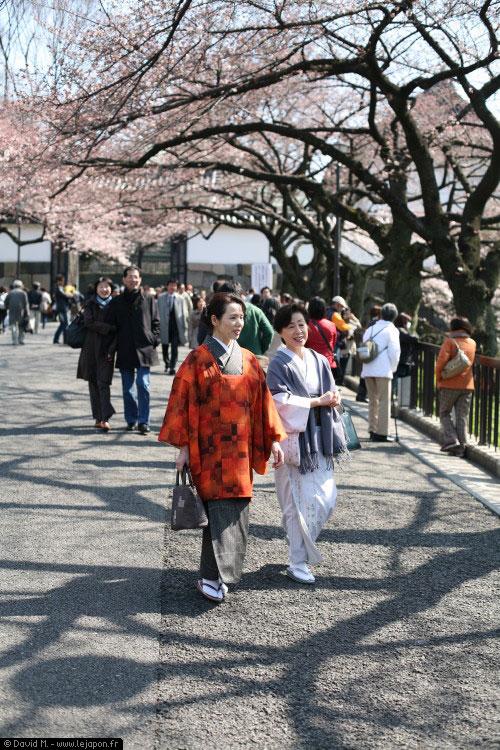 Balade sous les Sakura - cerisiers en fleurs à Tokyo