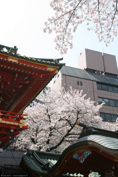 Sanctuaire temple sakura et immeuble building à Tokyo
