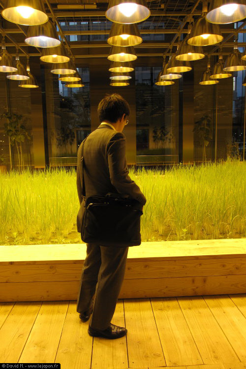 Building Pasona avec une rizière en intérieur