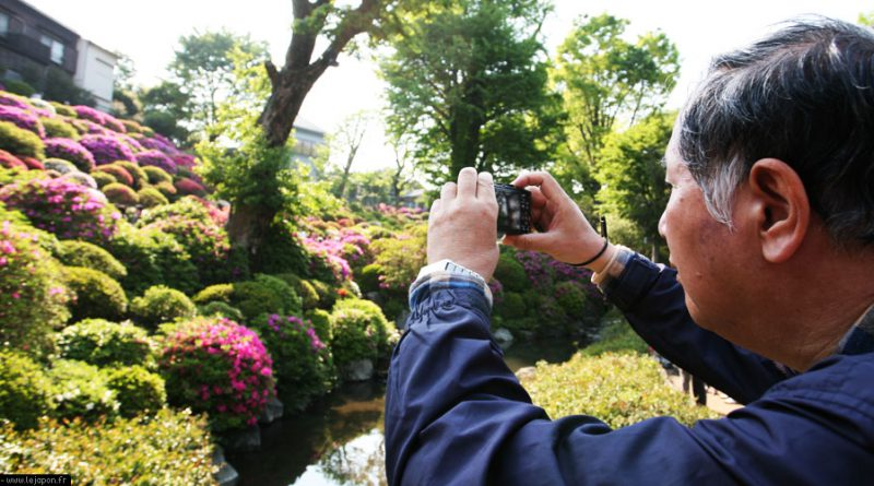 azalea-sanctuaire-nezu-tokyo_IMG_1228