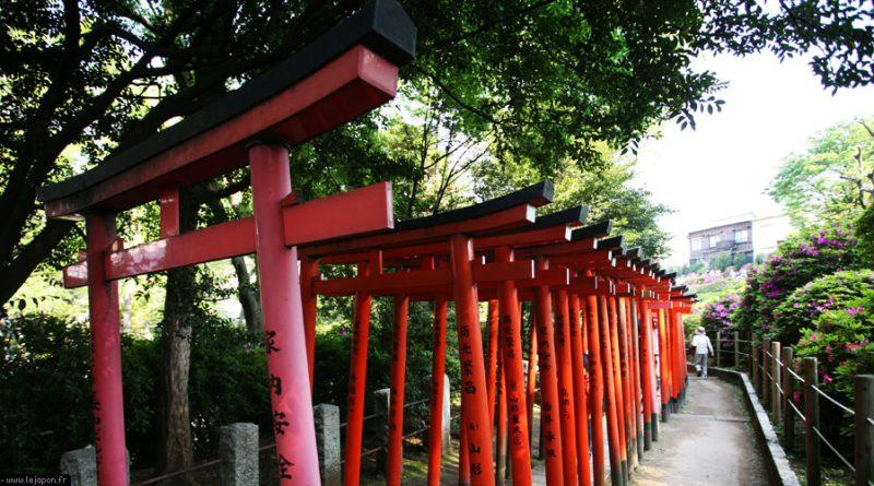 azalea-sanctuaire-nezu-tokyo_IMG_1357