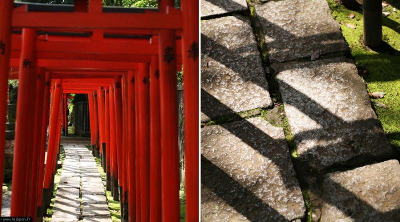 azalea-sanctuaire-nezu-tokyo_IMG_5815