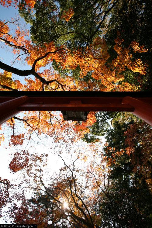 Automne à Kyoto