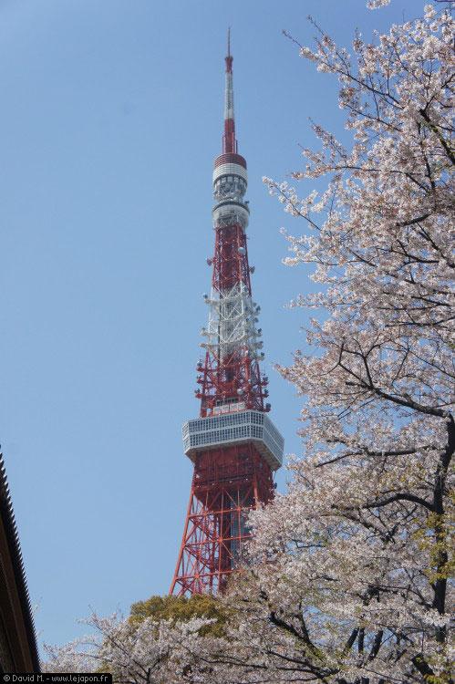Au milieu des Sakura la Tokyo Tower avec son antenne tordue après le séisme du 11 Mars 2011 qui a touché le Japon