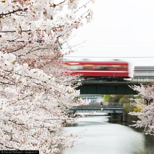 Sakura Yokohama