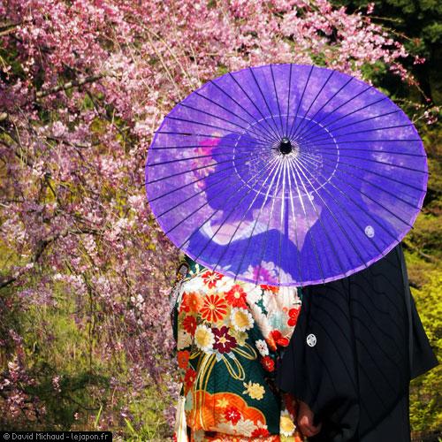 Jeune couple japonais en kimono sous les cerisiers en fleur - Sakura