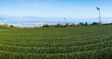 Fuji Shizuoka Tea