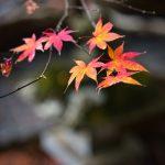 chichibu-031IMG_7192