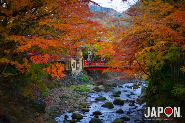 Shuzenji Koyo (feuilles d'automne)