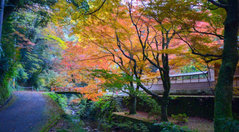006temple-Gakuen-ji-izumo-NIK_3330-lejapon