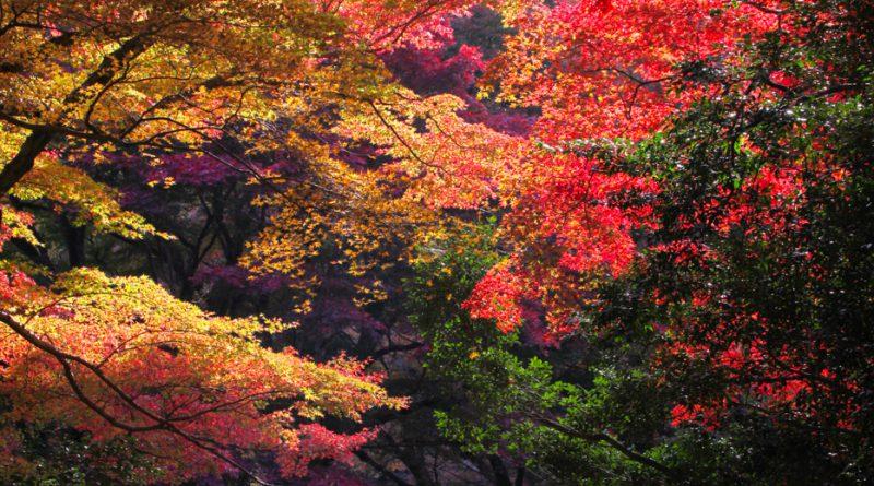 Temple Gakuen-ji Izumo