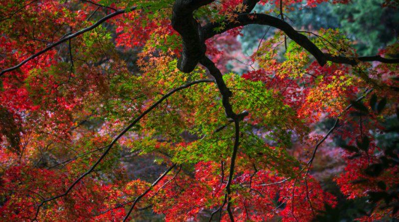 032temple-Gakuen-ji-izumo-IMG_8145-lejapon