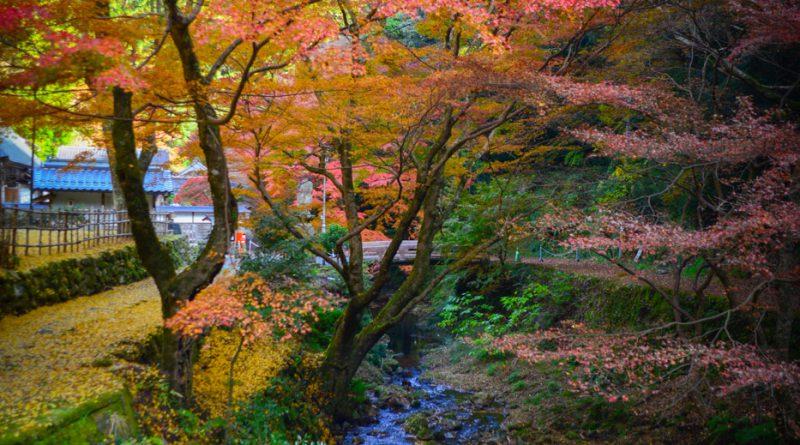036temple-Gakuen-ji-izumo-NIK_3442-lejapon