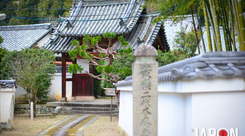 003uji-kyoto-sencha-matcha-NIK_5757-lejapon