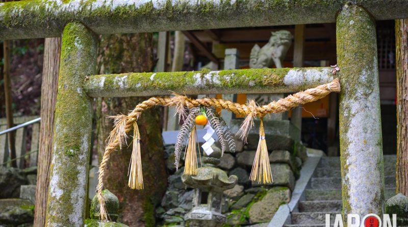 031uji-kyoto-sencha-matcha-NIK_5964-lejapon