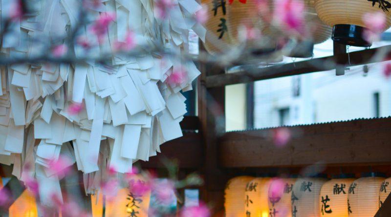 043uji-kyoto-sencha-matcha-NIK_6097-lejapon