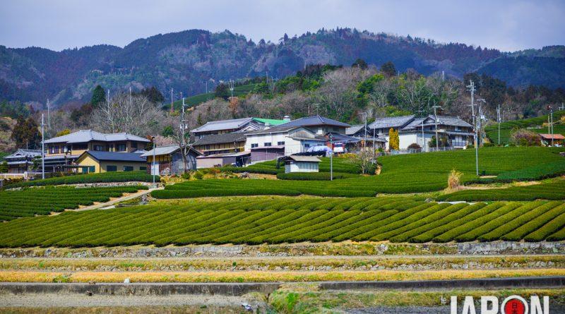 049uji-kyoto-sencha-matcha-NIK_6143-lejapon